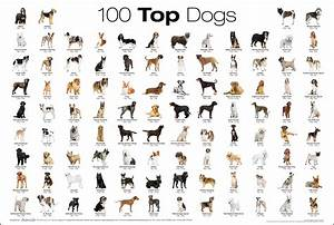 Top 100 Dog Breed Poster
