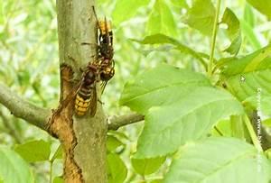 Pflanzen Gegen Wespen : fressen tiere b ume haben patenb zume angst vor tieren ti re im patenwald ~ Frokenaadalensverden.com Haus und Dekorationen