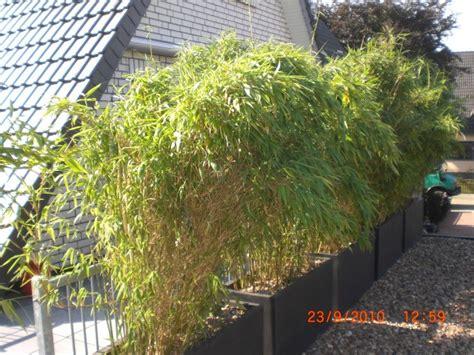 Bambus Im Garten. Bambus Garten Daran Sollten Sie Bei Der