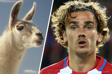 Antoine griezmann is a french professional footballer who plays as a forward for spanish club atlético madrid and the france. Man Utd target Antoine Griezmann gets new hairdo - but footie fans are not impressed | Daily Star