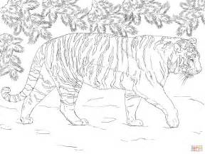 Siberian Tiger Coloring Pages Printable