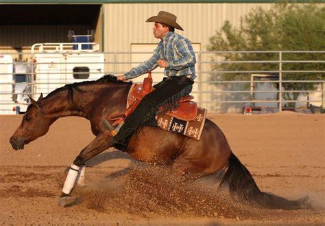 reining horses horse arabian rodeo fair association deschutes county redmond bridle kon stallions center equestrian farms bitless etc expo event