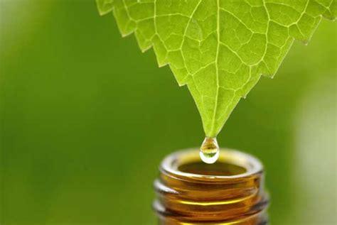 Óleo Essencial de Melaleuca (Tea Tree