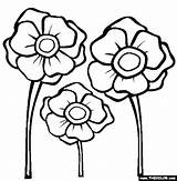 Poppy Colouring Coloring Pages Poppies Template Printable Remembrance Flower Drawing Thecolor Activities Anzac Others Library Them Templates Sheets Clipart Getdrawings sketch template
