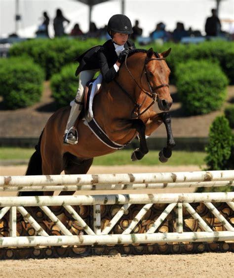 pony hunter ponies horses horse finals hunters jumper want riding jumping welsh cute horseback equestrian