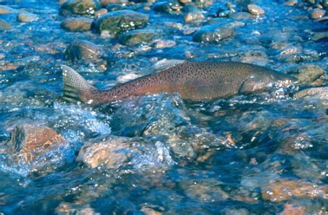 fishing  conservation groups urge officials  reject