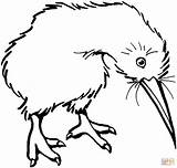 Bird Coloring Kiwi Clipart Drawing Pages Clip Line Printable Cliparts Birds Supercoloring Clipartbest Super Library Categories sketch template