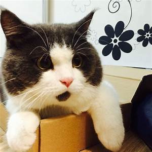 Perpetually Surprised Cat - The Awesomer