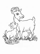 Goat Coloring Pages Printable Goats Animals Template Recommended sketch template