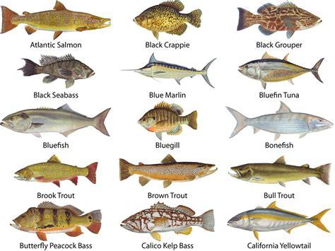 gamefish window decals mudholecom