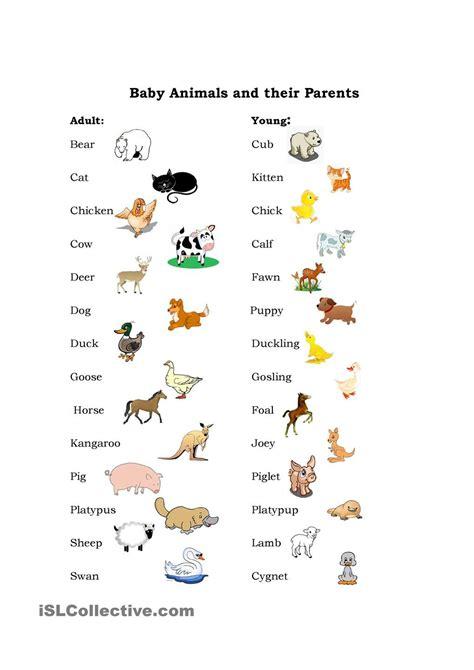 baby animals teaching english pinterest baby animals