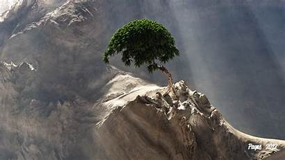 Bonsai Tree Desktop Wallpapers Fantasy Backgrounds Wallpaperaccess
