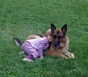 16 best companion dog sam images on pinterest german for Good companion dog for german shepherd