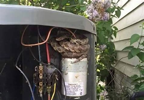 warning snakes hiding  air conditionersthe air
