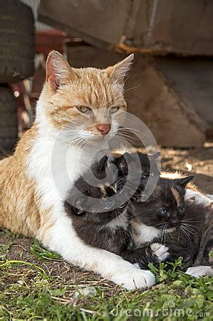 Mother Cat Protecting Kittens