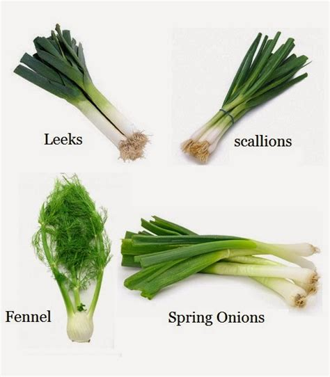 what is a scallion how to re grow leeks scallions spring onions and fennel from kitchen scraps 101 gardening