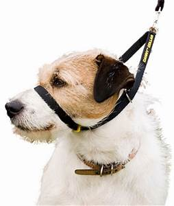 Canny Collar No Pull Dog Collar | Gentle Head Halter ...