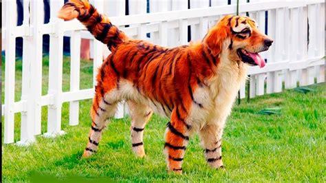 le canapé le plus cher du monde chien le plus cher du monde ou16 jornalagora