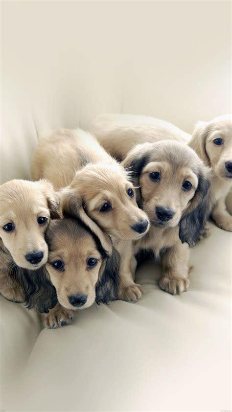 puppy dog retriever family animal papersco