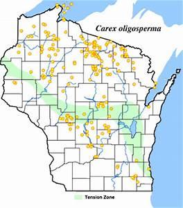 Wetland Plants of Wisconsin: Carex oligosperma, few-seeded ...