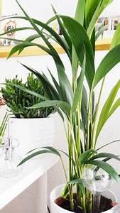 Welche Pflanzen Sind Nicht Giftig Für Katzen : welche pflanzen sind ungiftig f r katzen katzen pinterest katzen katzen wohnungen und ~ Eleganceandgraceweddings.com Haus und Dekorationen