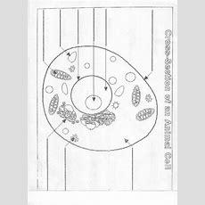 Cell Diagram Worksheet (simplified) Blankcelldiagramworksheetjpg (802×1101) School