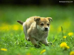 here some charming images of dogs and puppies