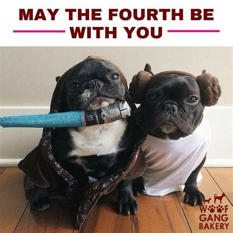 Woof Gang Bakery #FlemingIsland. May the 4th be with you ...