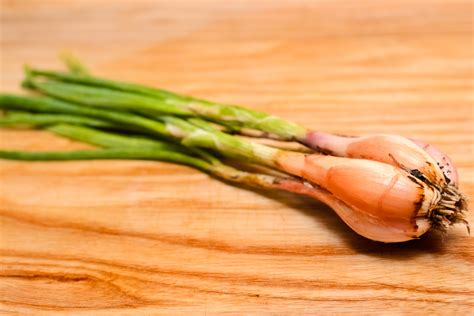 what are shallots how to tell the difference between spring onions shallots and green onions