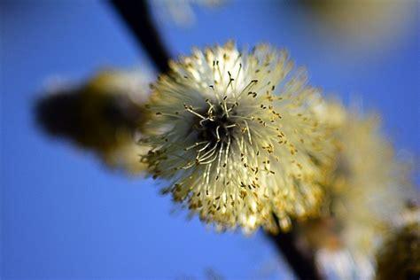 Orai: jau greitai driokstelės pavasaris - DELFI