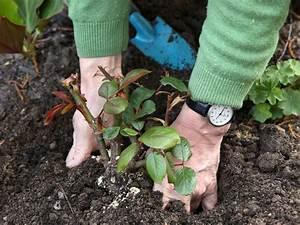 Was Ist Im Februar Im Garten Zu Tun : gartentipps das ist im mai zu tun ~ Lizthompson.info Haus und Dekorationen