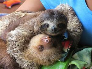Baby Sloth Hug - Bing images