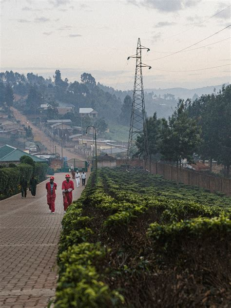 In rwanda, as in other developing countries, coffee farming is reserved for steep slopes and soils the mulching systems were selected in coffee plantations to which the same mulch material had. Sorwathe tea plantation Rwanda-28