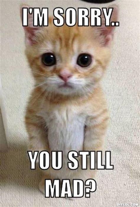 Sorry Meme - i m sorry i love you google search l l love e e pinterest memes and cat