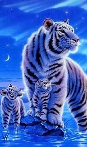 Cute Tiger Wallpapers Wallpaper | Cute tigers, Tiger ...