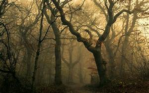 Nature, Landscape, Mist, Forest, Path, Leaves, Fall, Sunrise, Dark, Trees, Wallpapers, Hd