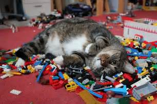 lego cat kaori likes things caturday cats sleeping on lego piles