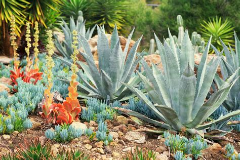 succulents outdoors choose the best succulents for landscaping