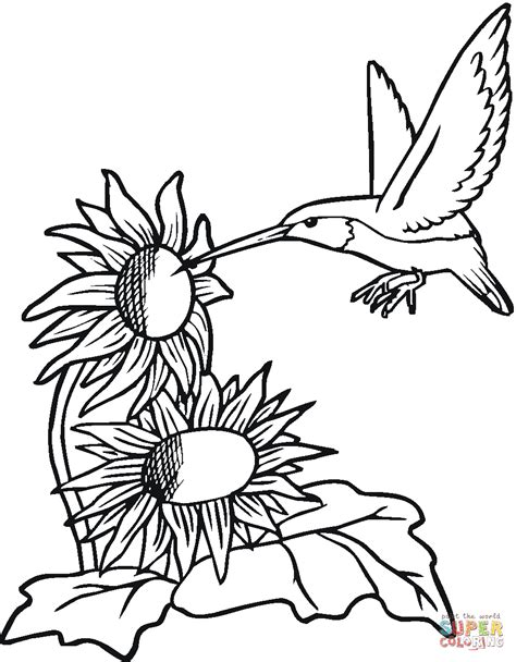 Hummingbird With Sunflowers | Sunflower coloring pages