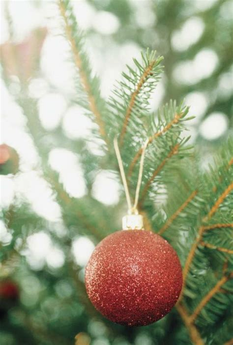 recycle your christmas trees drop off sites around metro