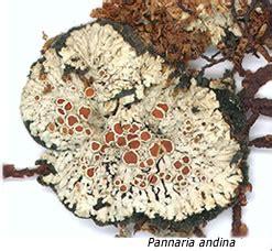 Botanischer Garten Berlin Herbarium by Bgbm Herbarium Collections Lichens