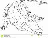 Crocodile Crocodilo Pages Tick Tock Croc Royalty Imagem Coloring Template Drawing Para Coccodrillo Colorir Templates sketch template