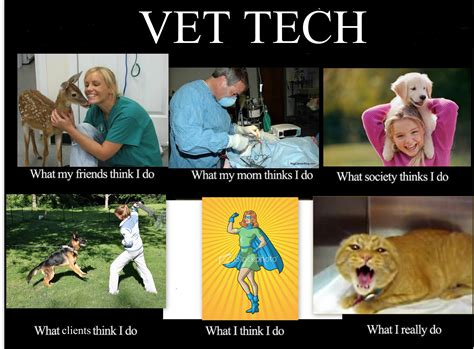 Vet Tech Memes - image 249983 what people think i do what i really do know your meme