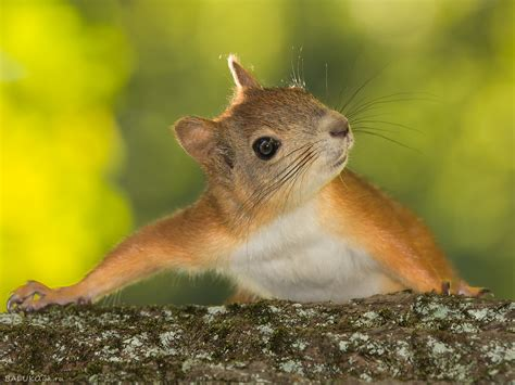 Squirrel Full Hd Wallpaper And Background Image