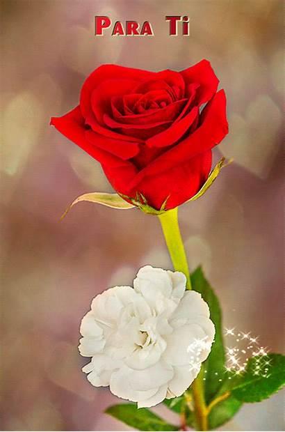 Flor Ti Bella Esta Amor Flores Hermosa