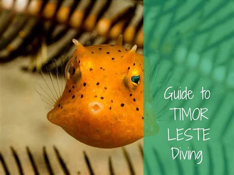 Ultimate Guide To Dive Timor Leste Timor Leste Timor