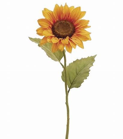 Sunflower Stem Joann Drawing Flowers Yellow Spray