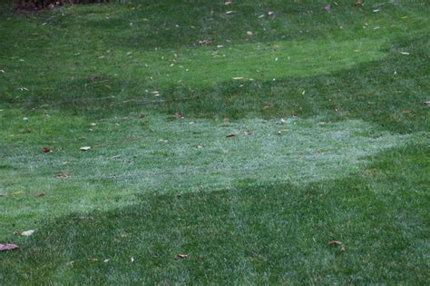 yard grass types yard grass types 28 images the complete beginner s guide to lawn grass raleigh cary nc