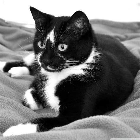 fireclan warrior cat clans wiki fandom powered  wikia