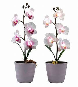 Orchidee Blüht Nicht Mehr : led kunstblume orchidee von kodi ansehen ~ Lizthompson.info Haus und Dekorationen